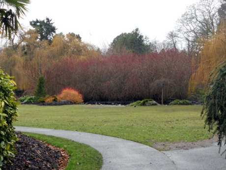 Was delighted by this scene at Beacon Hill Park; so many colours for a mid-January day!