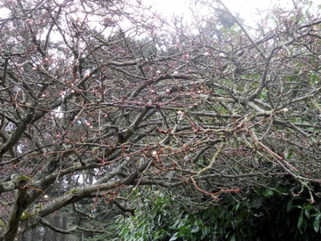 From a distance, I thought this tree was experiencing an early bloom. Upon closer inspection, I find it covered with berries in shades of pink and white.