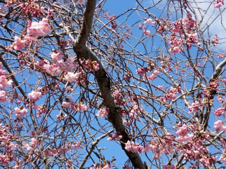 The air is full of the scent of cherry and plum blossoms.