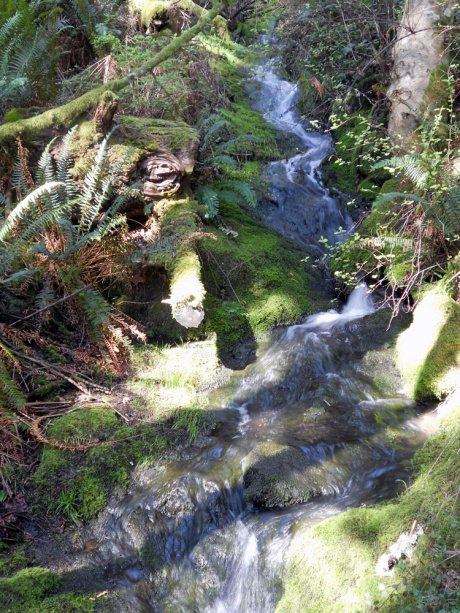 The trickle of streams through the forest.