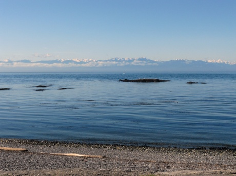Such a beautiful morning at the Dallas Road waterfront. The ocean was calm and the Olympic Mountains were glimmering in the morning sun. Just after I took this, I met Fred the west-highland terrier and his human. Fred sat by my feet while I spoke with his human; I wish I had remembered to take his picture as he was so very sweet.