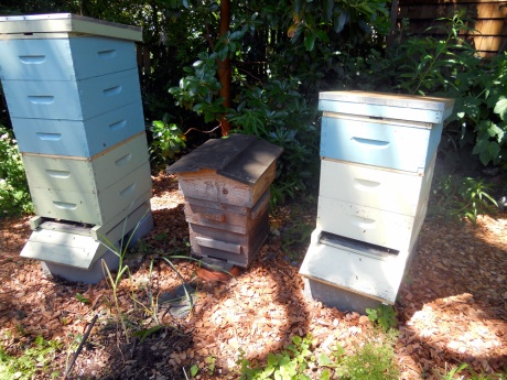Keeping bees in a  beautiful garden in the Oaklands neighbourhood.