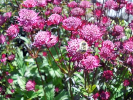 Happy bee.