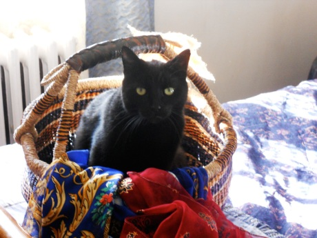 Carlos retreats to the comfort of his basket.
