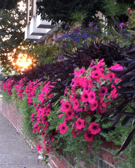 Flowers at City Hall with glimpse of the setting sun.