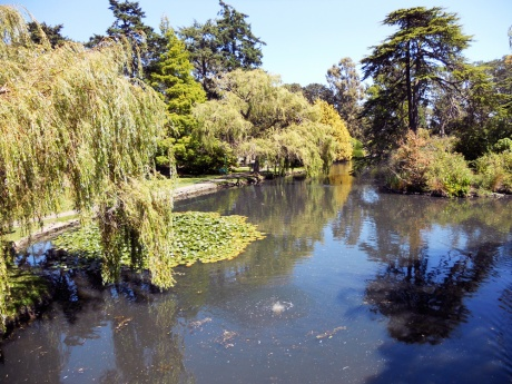 Looking over a pond from the stone bridge in Beacon Hill Park, Victoria BC. I love all the colours and reflections.