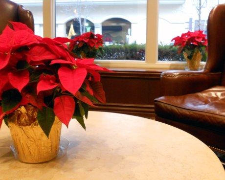 Holiday cheer and colour in the lobby at Hotel Lusso.