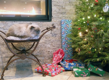 A big charming cat enjoying the Holidays!