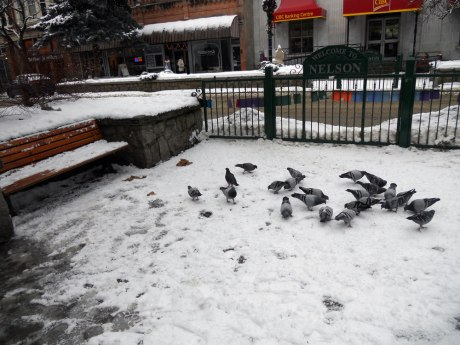 The right number of pigeons for a small town! They seemed to be finding something to eat in the snow.