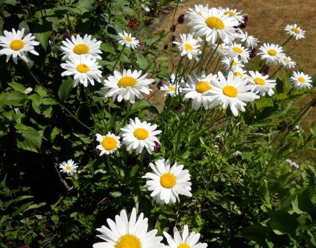 Also, daisies.