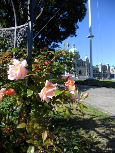 The Parliament Buildings from the corner of Government and Belleville streets, with very fragrant rose.