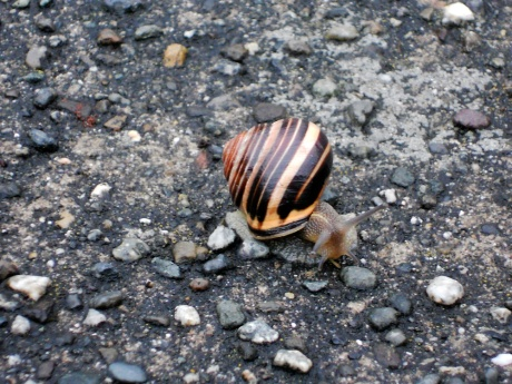 Found this little guy on a sidewalk in Fairfield. His shell was so beautiful.