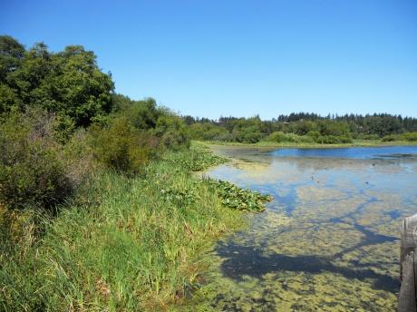 View across Blenkensop Lake from the trestle.