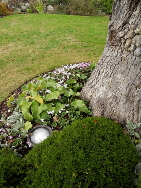 Tiny autumn cyclamen were in abundance.