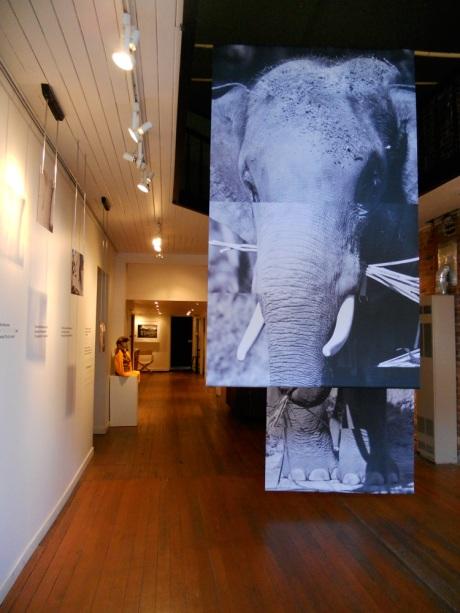 dkn_Art_ElephantEarth1