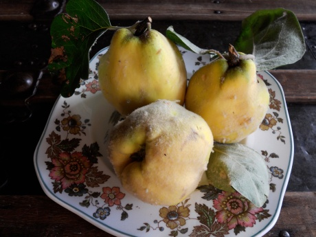 Fuzzy and flavourful: my new favourite fruit!