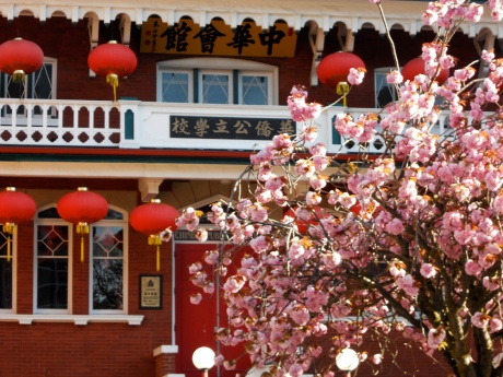 Fluffy pink, Chinese Public School, Chinatown, Victoria BC.