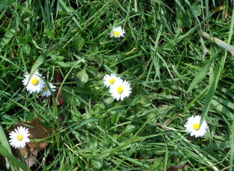Pretty little daisies.
