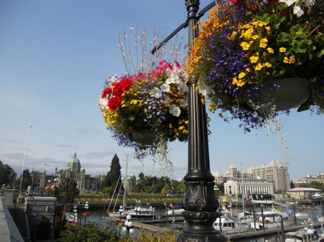 All the lamp standards downtown are adorned with hanging flower baskets.