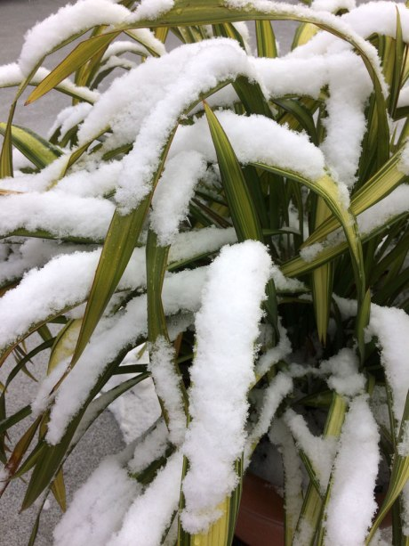 snowday_part1_3