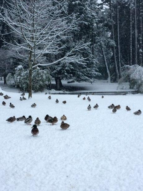 snowday_part3_6