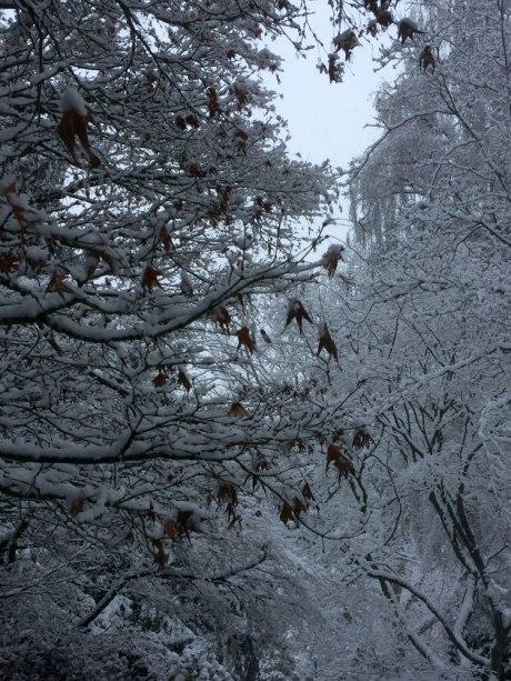 snowday_part3_9