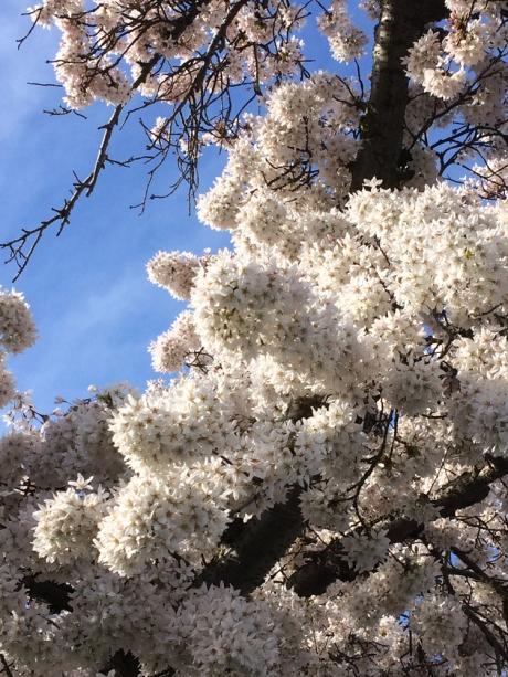 01_SpringColour_White